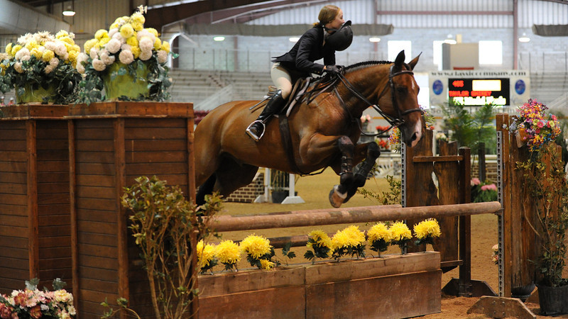 Horse show (15).jpg