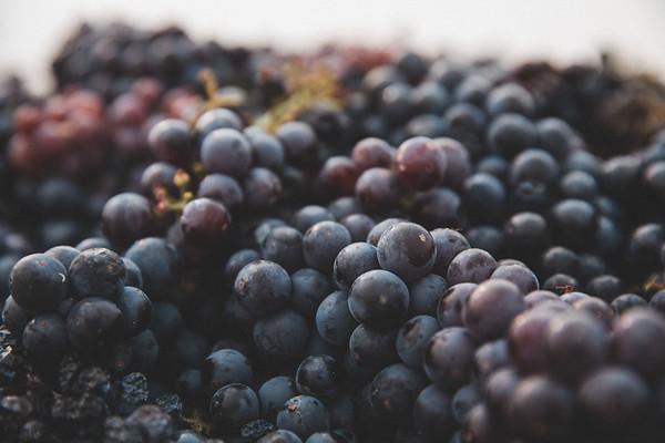 Mesilla Vineyard Estates - Final Harvest 2020