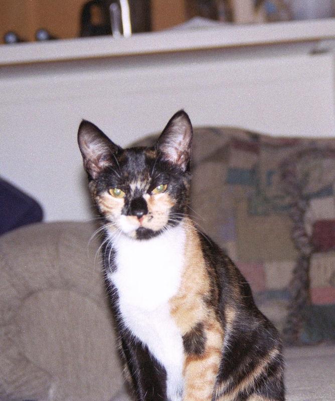 2003 12 - Cats 26.jpg