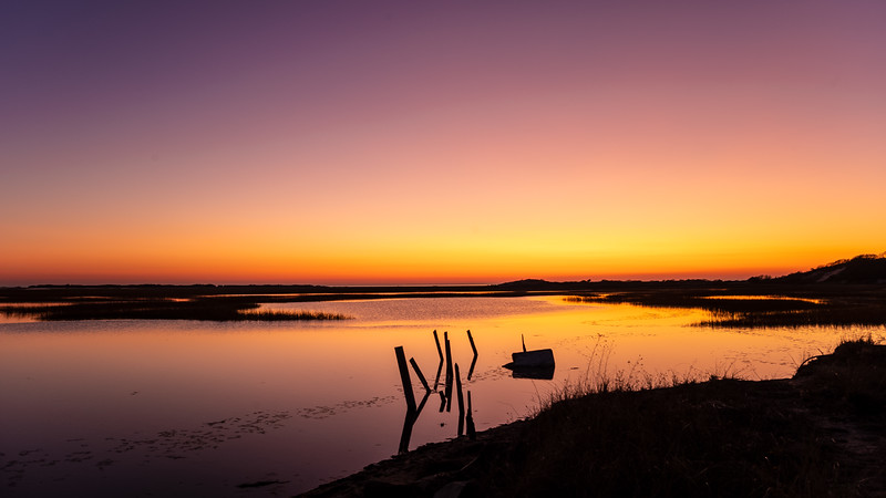 mauve & coral Long Point Marsh.jpg