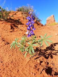 2013 Day 11 Moab UT - Mesa Verde CO