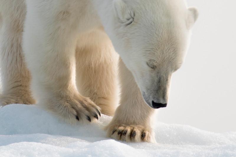 20180814_20180814_Svalbard-6820_SvalbardTimoT_TimoTammisto.jpg