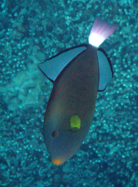 415- 20080416- Hawaii 20-Snorkelling IMG_0544.jpg
