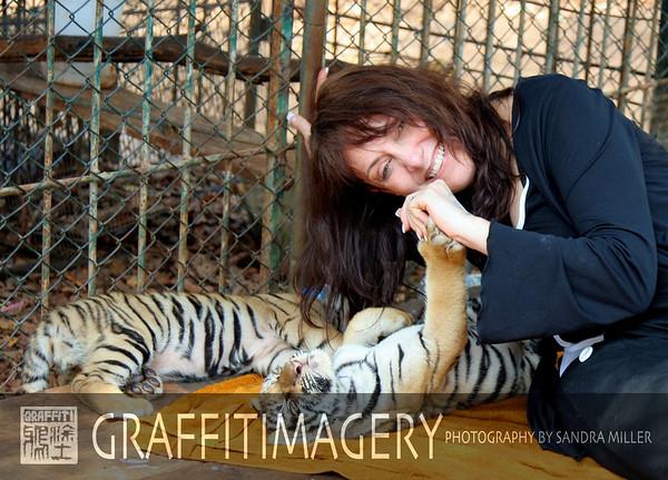 Tiger Temple Kanchanburi  2/14/08