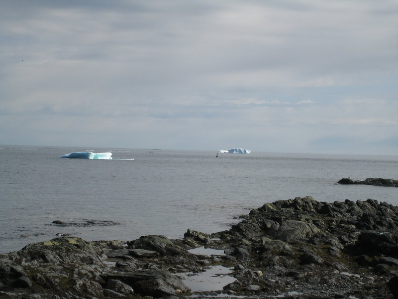 More Icebergs! L'Anse aux Meadows, Newfoundland