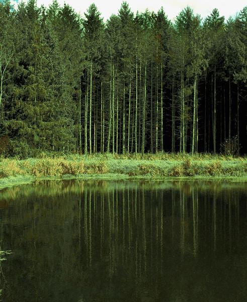 Glacier Park Pine Pond .jpg