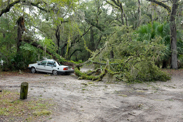 Tree Damaged Car at Jekyll Harbor Marina 10-10-11