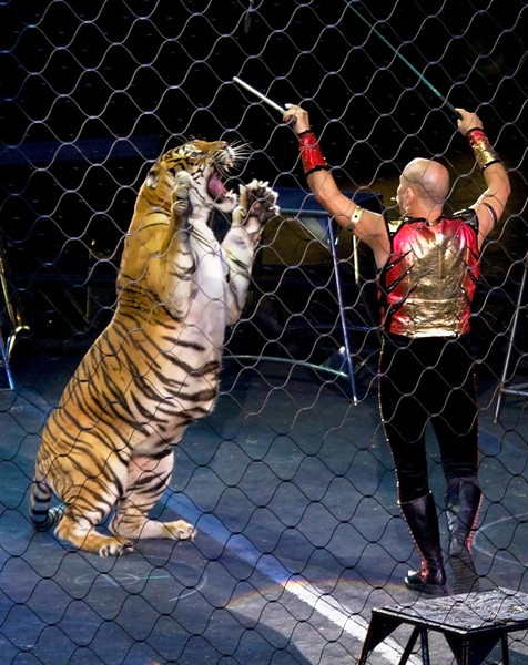 tigerferocious2.jpg