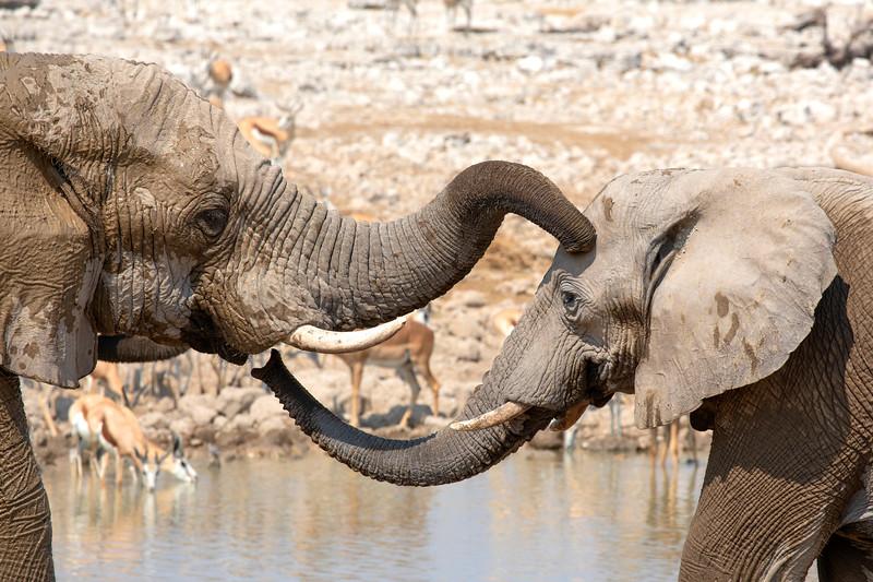 Namibia 69A8002.jpg