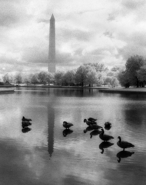 Lame Ducks1 11x14.jpg