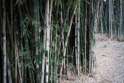 2018-06-24 Taman Sakura Hutan Bambu