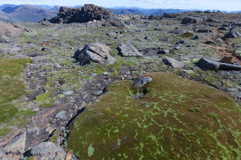 Tasmania_2015_246.jpg