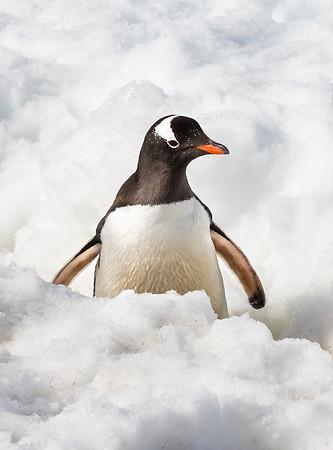 Antarctica Dec 2019