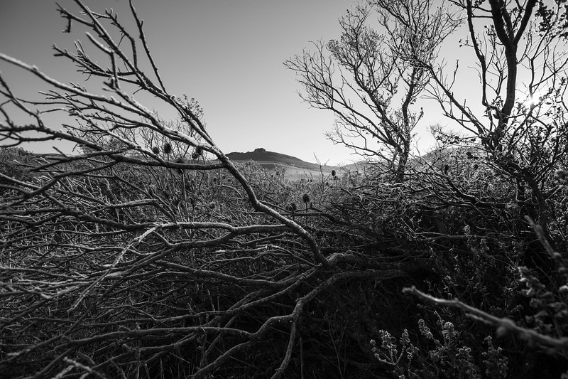 California Frost