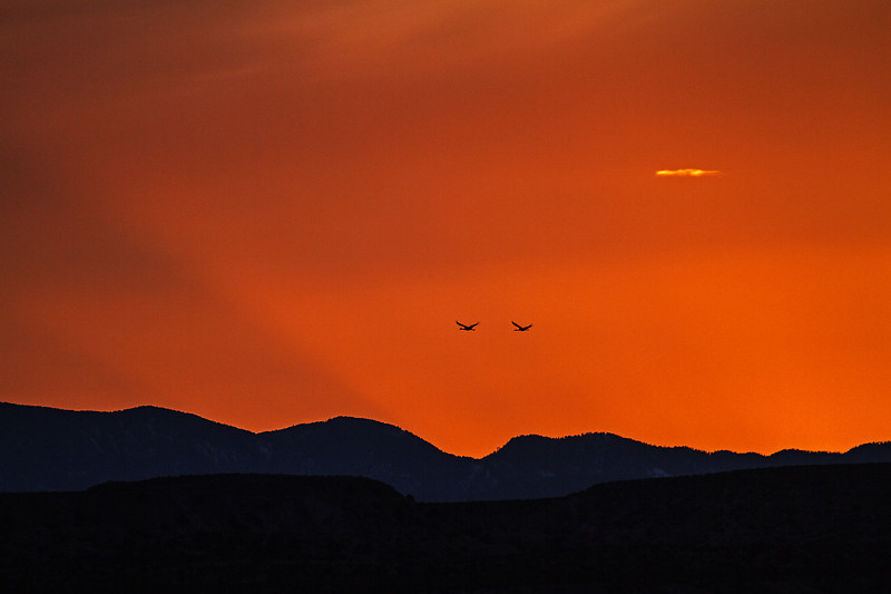 Two Sandhill Cranes Flying at Sunset, Bosque del Apache National Wildlife Refuge, New Mexico, USA