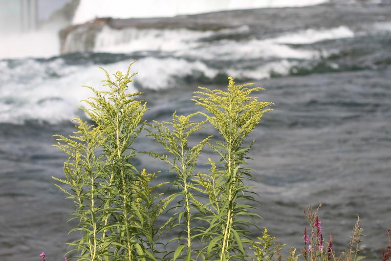 NiagaraFalls014.JPG