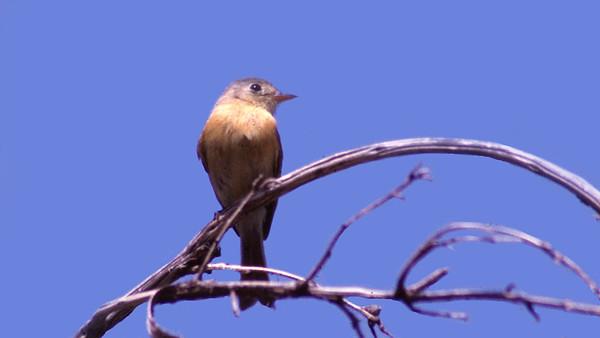 Arizona Bird Library