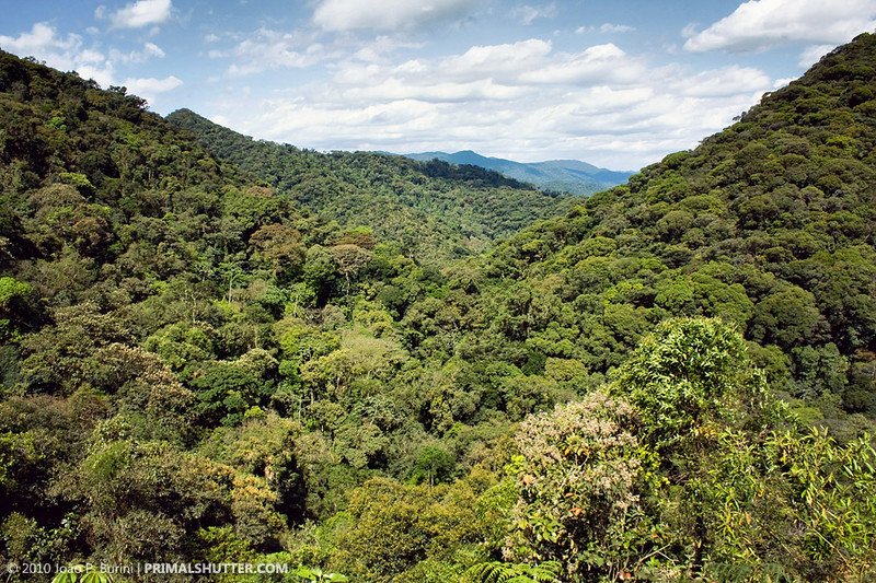 forest-valley.jpg