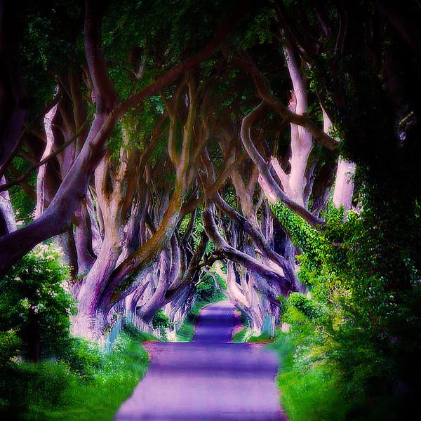 trees..11.jpg