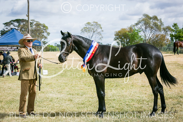 Ch/Res Led Yearling