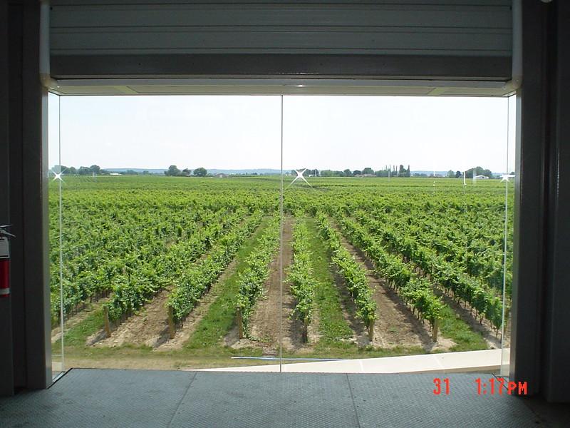 vineyard_1808143517_o.jpg