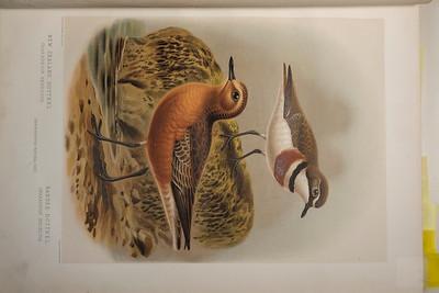 190527_birds_naturalhistory_edited