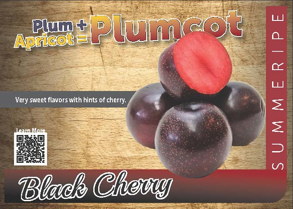 PPC Black Cherry 2018_Page_1.jpg