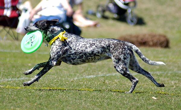 Disc Dog Championships