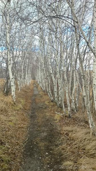 through a line of trees