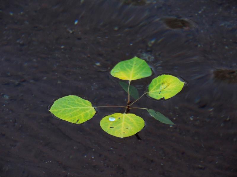 float away