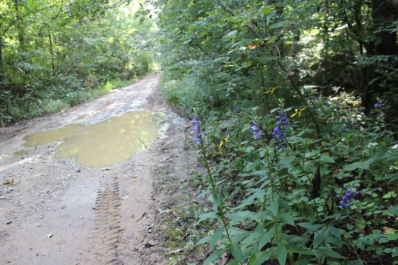 Rocky River, Warren County, Van Buren County, exploring, ATV, 4x4, RZR, karst, desolation, late summer wildflowers, rural decay, Tennessee, Cumberland Plateau, isolation,