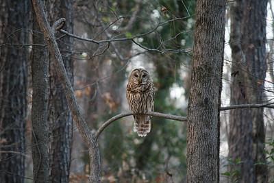 Owl 2016