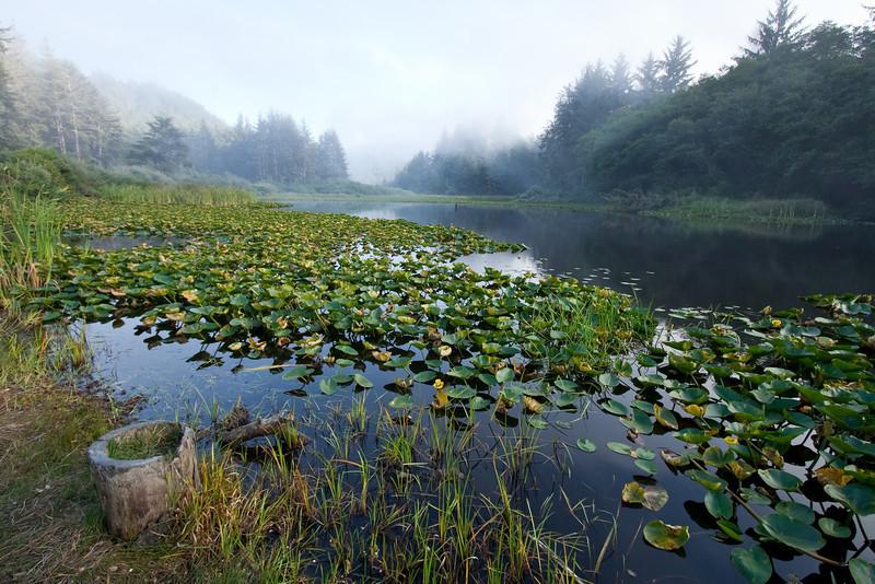 Rising Fog and Lagoon