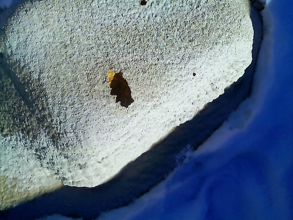 bees love coated roofs