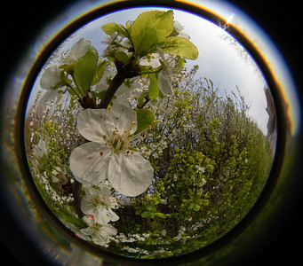 Fisheye Fun on the Old Hills