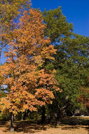 Nerstand Big Woods Fall