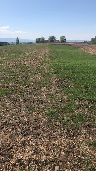 Høstkorn med ulik jordarbeiding