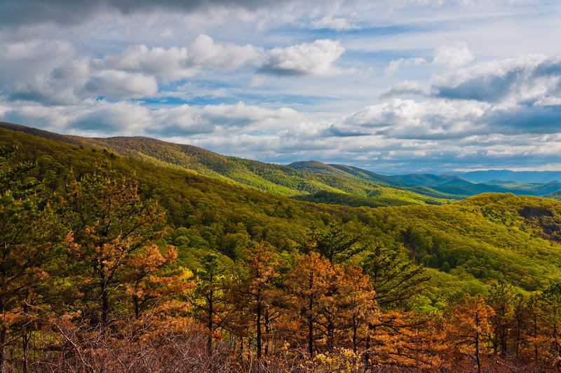 Evening view of the Appalachians from Skyline Drive in Shenandoah National Park, Virginia.