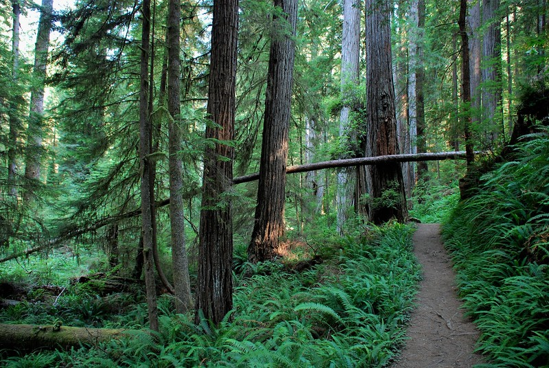 fun things to do in northern california - humboldt red