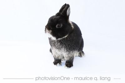 Rabbit Portraits