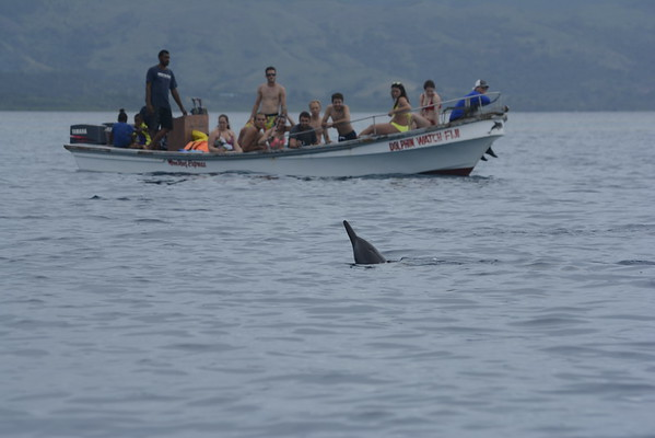2015 Dolphins & Kayaking