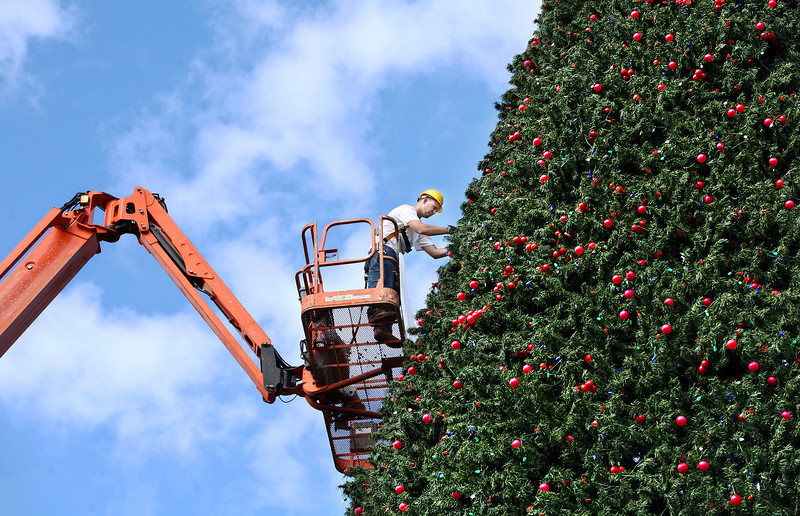 112811 - DELRAY BEACH - Meisner Electric employee, Richie Poillucci, 28, puts the finishing touches on the famous 100-foot Christmas tree in Delray Beach. The city's 100-foot Christmas tree will be lighted Dec. 1 at Old School Square, kicking off a month of holiday activities and continuing its centennial celebration.  Santa is arriving by helicopter at 7, and the lighting is set for 7:15 p.m. Photo by Tim Stepien