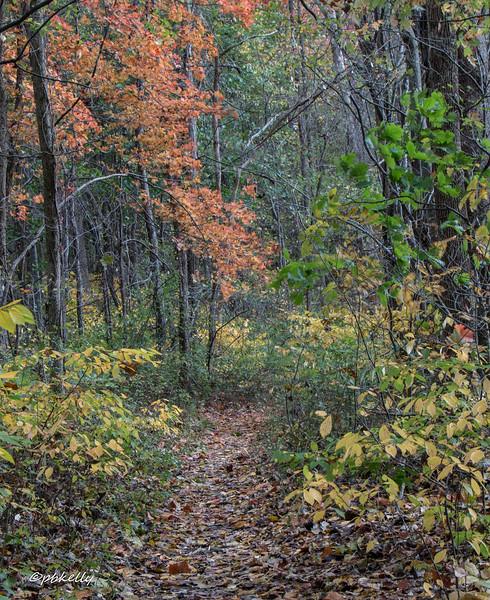 trails 102216-3.jpg