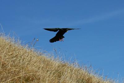 Brienzer Rothorn - Birds
