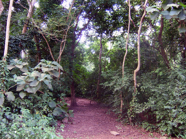 In the Rain Forest, Ghana, W. Africa
