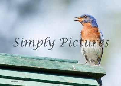 Blue Birds 139