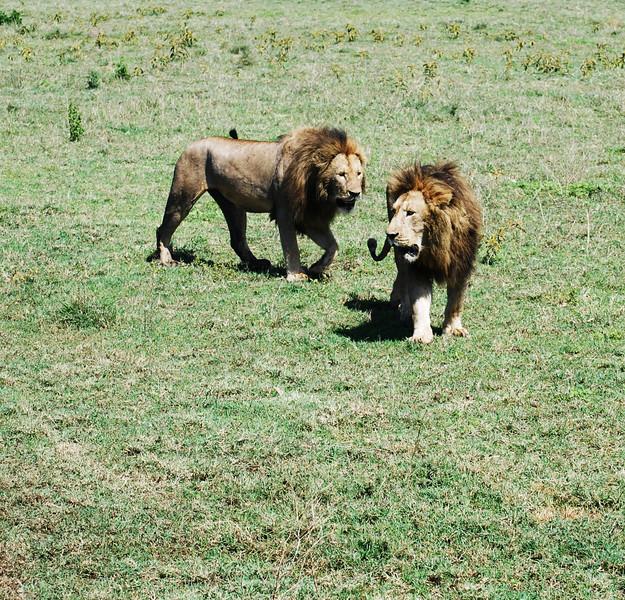 Ngorongoro (143).JPG