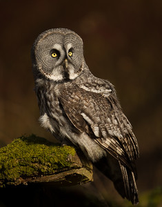 Owls Of The World masterclass