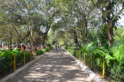 Guindy National Park - Chennai