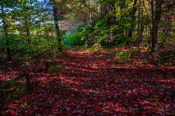 Milton Town Forest